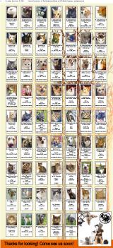 Adopt A Pet 2015