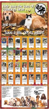 Adopt A Pet December 2013