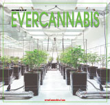 EVERCANNABIS October 2017
