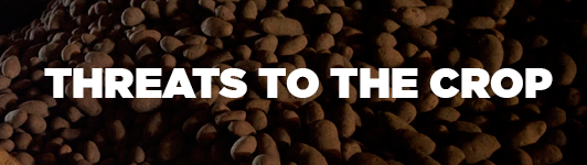 Threats to the potato crop