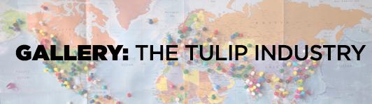 Ag: Tulip industry gallery