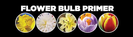Washington flower bulb primer
