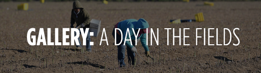 Gallery: A day in the fields