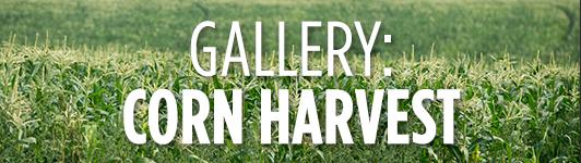 Corn gallery