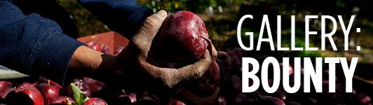 Apple harvest gallery