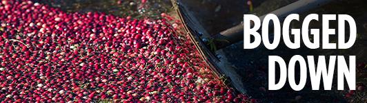 Cranberry mainbar