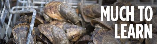 oyster mainbar