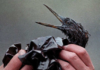 Image result for Exxon valdez Oil Bird