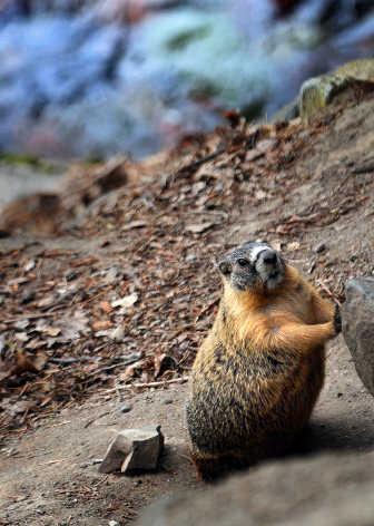 Marmot jobs