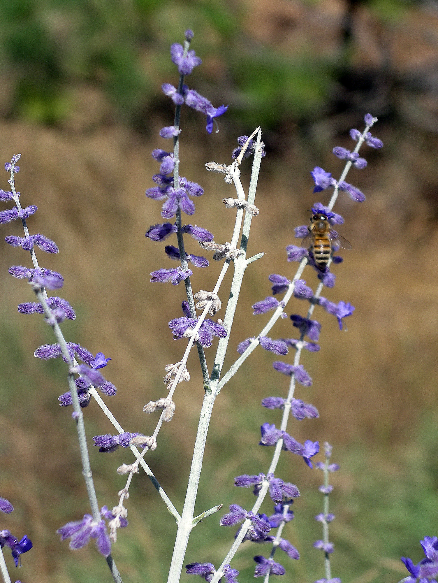Right Plants Help Bees With Winter Preparations The Spokesman Review