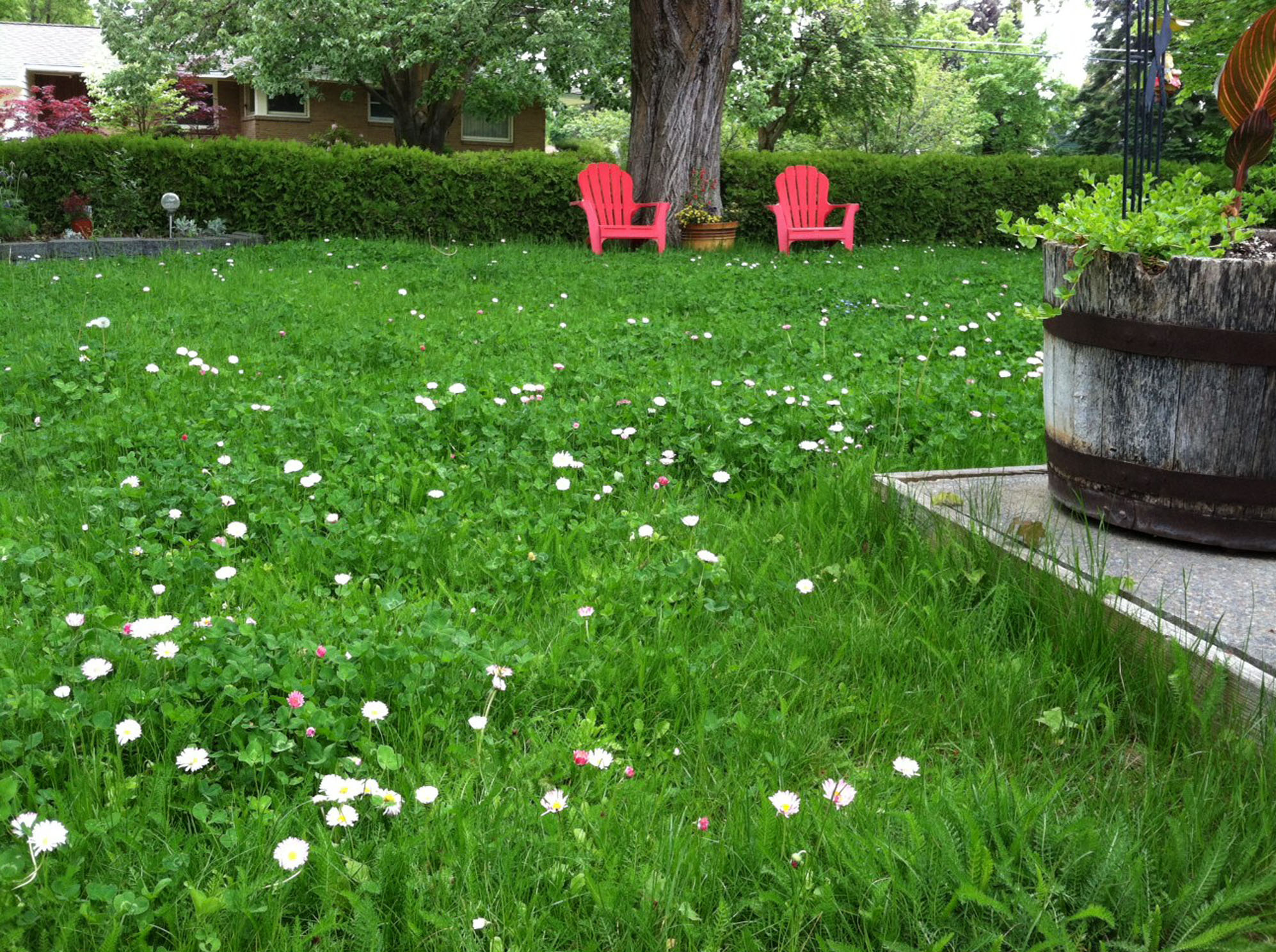 mellow meadow replaces lawn the spokesman review. Black Bedroom Furniture Sets. Home Design Ideas