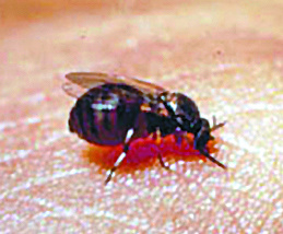Picaridin repellents help us cope with biting black flies