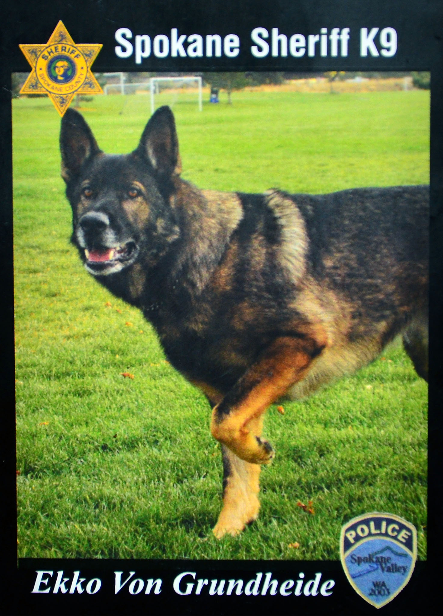 Police dog ekko takes down suspected motorcyle thief the for Bureau of motor vehicles michigan road license branch indianapolis in
