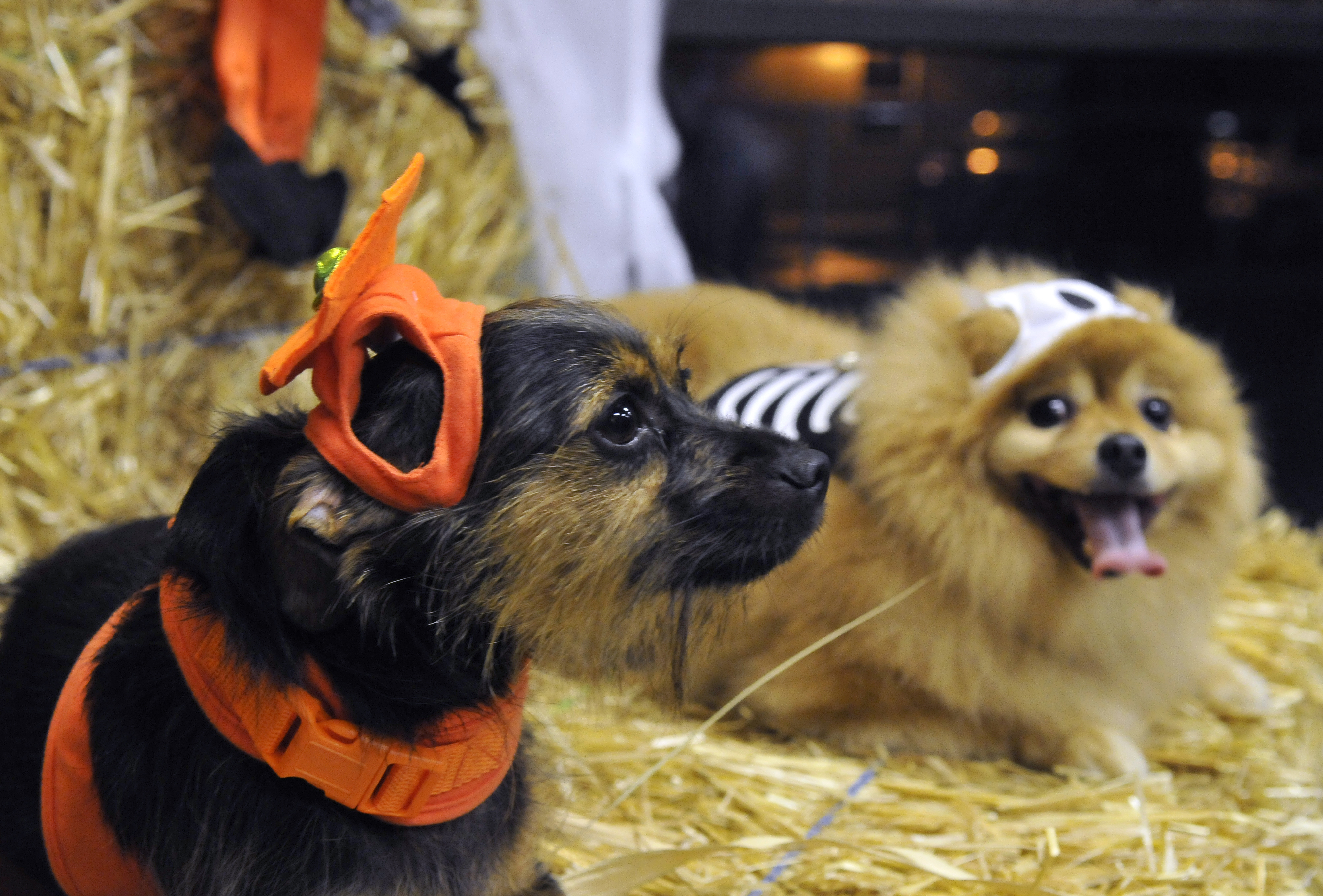 tricked out, ready for treats | the spokesman-review