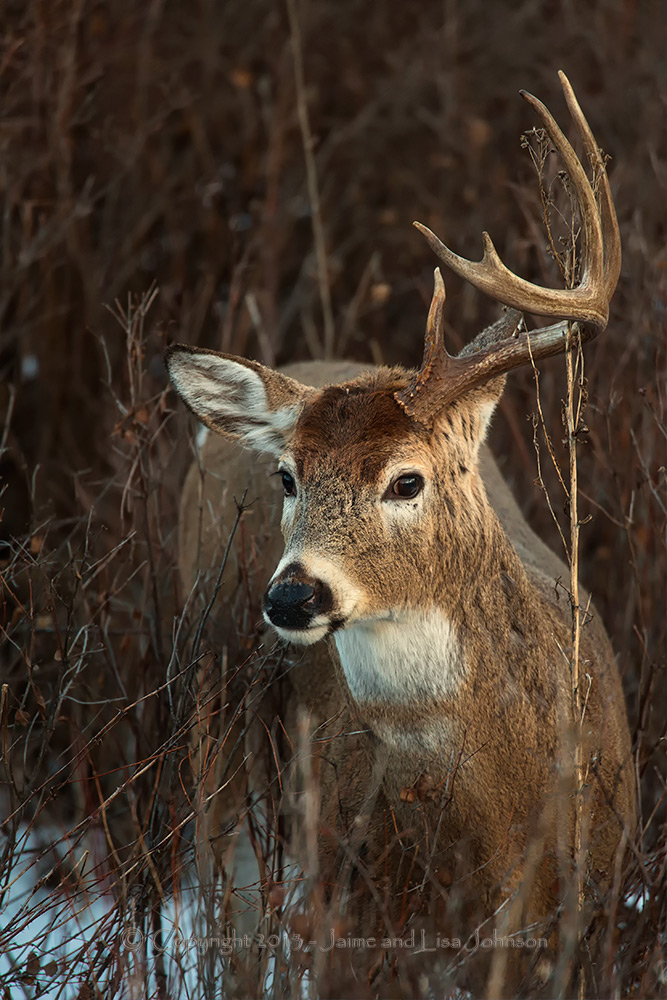 Shed hunters under scrutiny in Washington Legislature ...