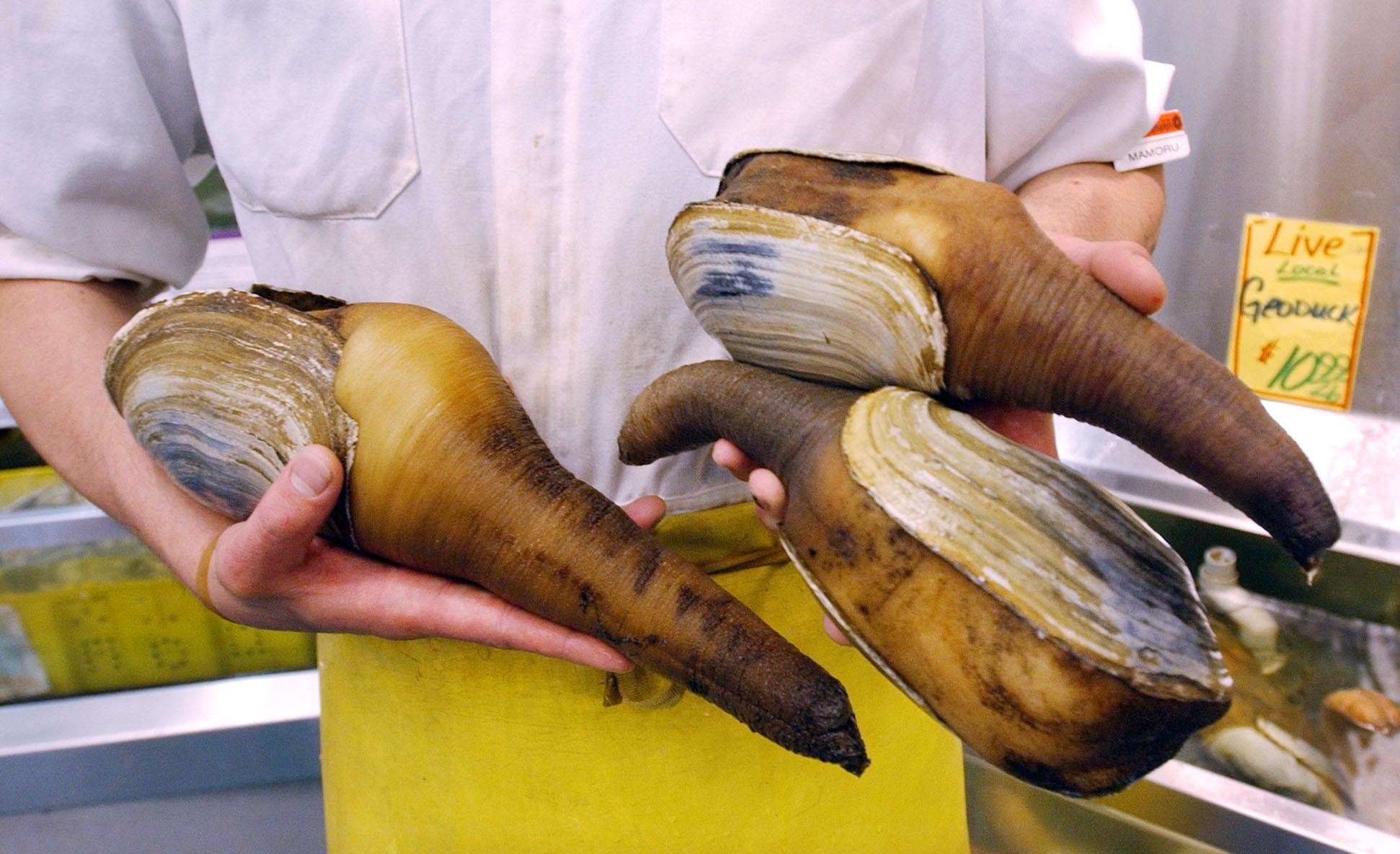 Live clam