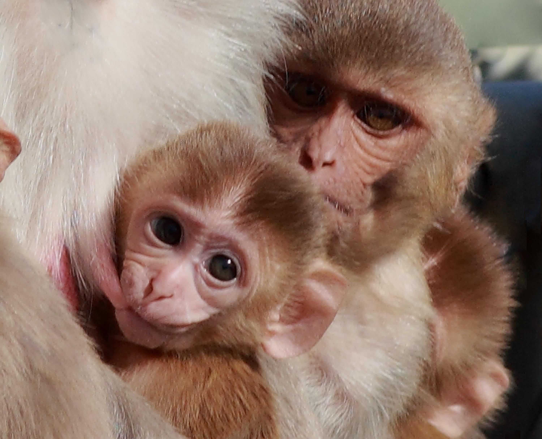 Секс фото человека с обезьяной 21 фотография