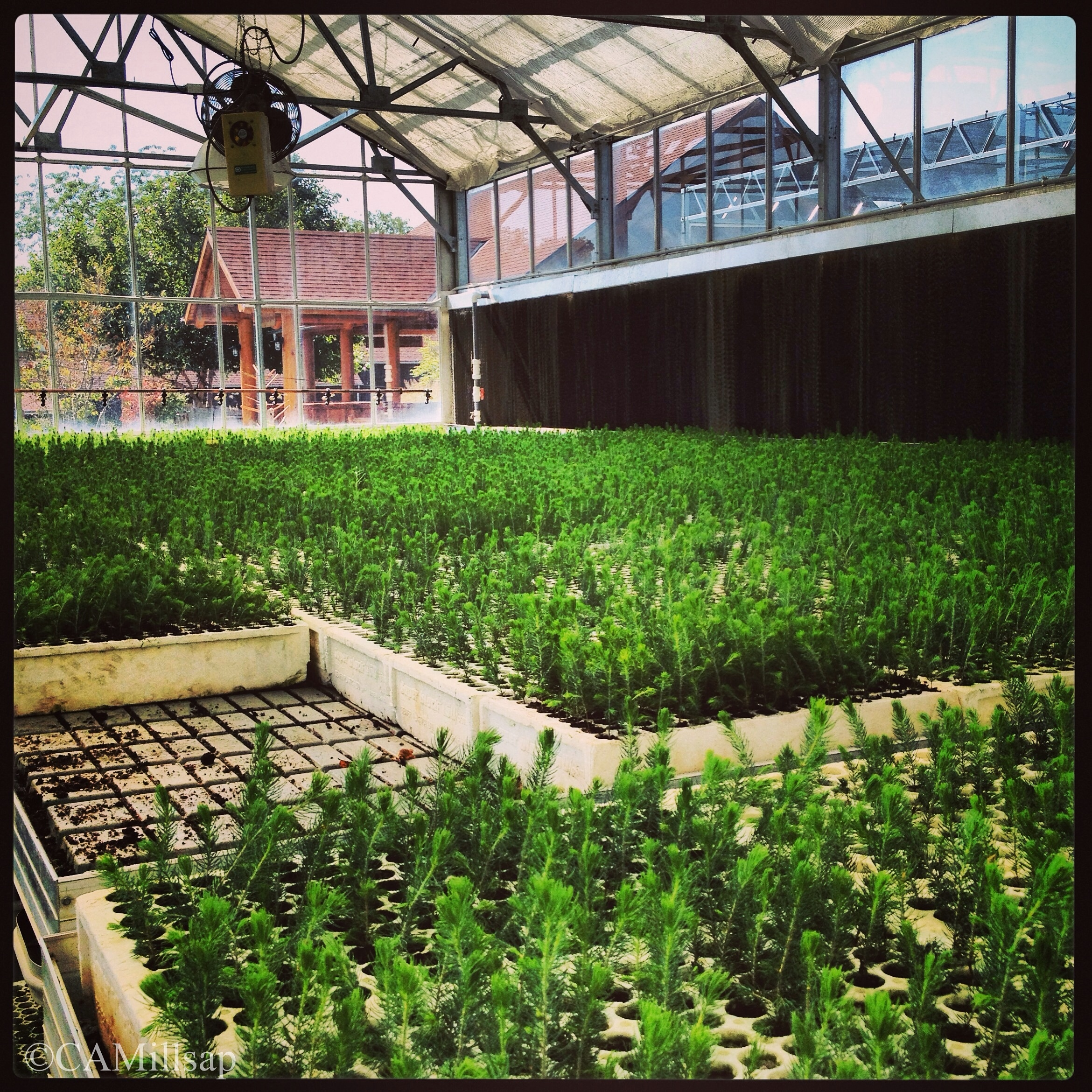 Photo Seedlings Grown At Arbor Day Farm Are Ready To Be Sent New