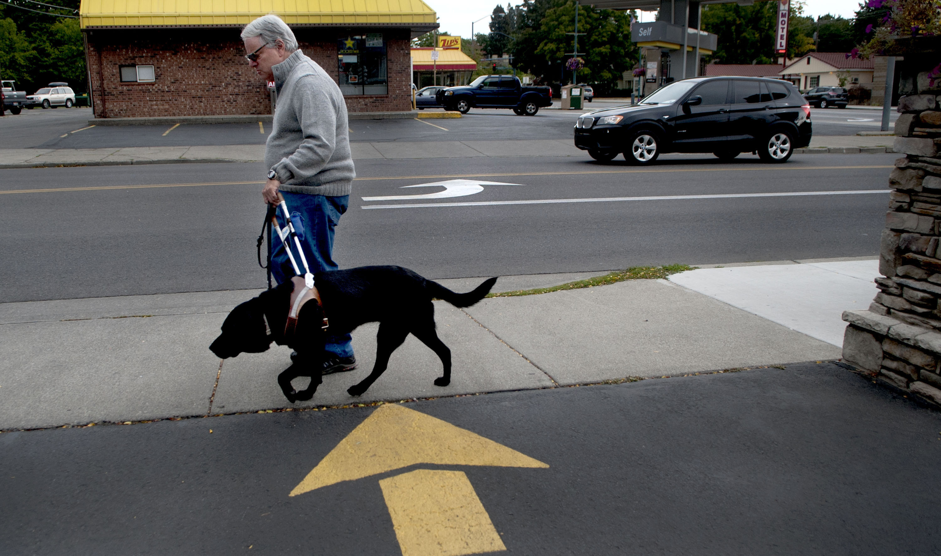 Fake service animals cause problems for the disabled business fake service animals cause problems for the disabled business owners the spokesman review 1betcityfo Images