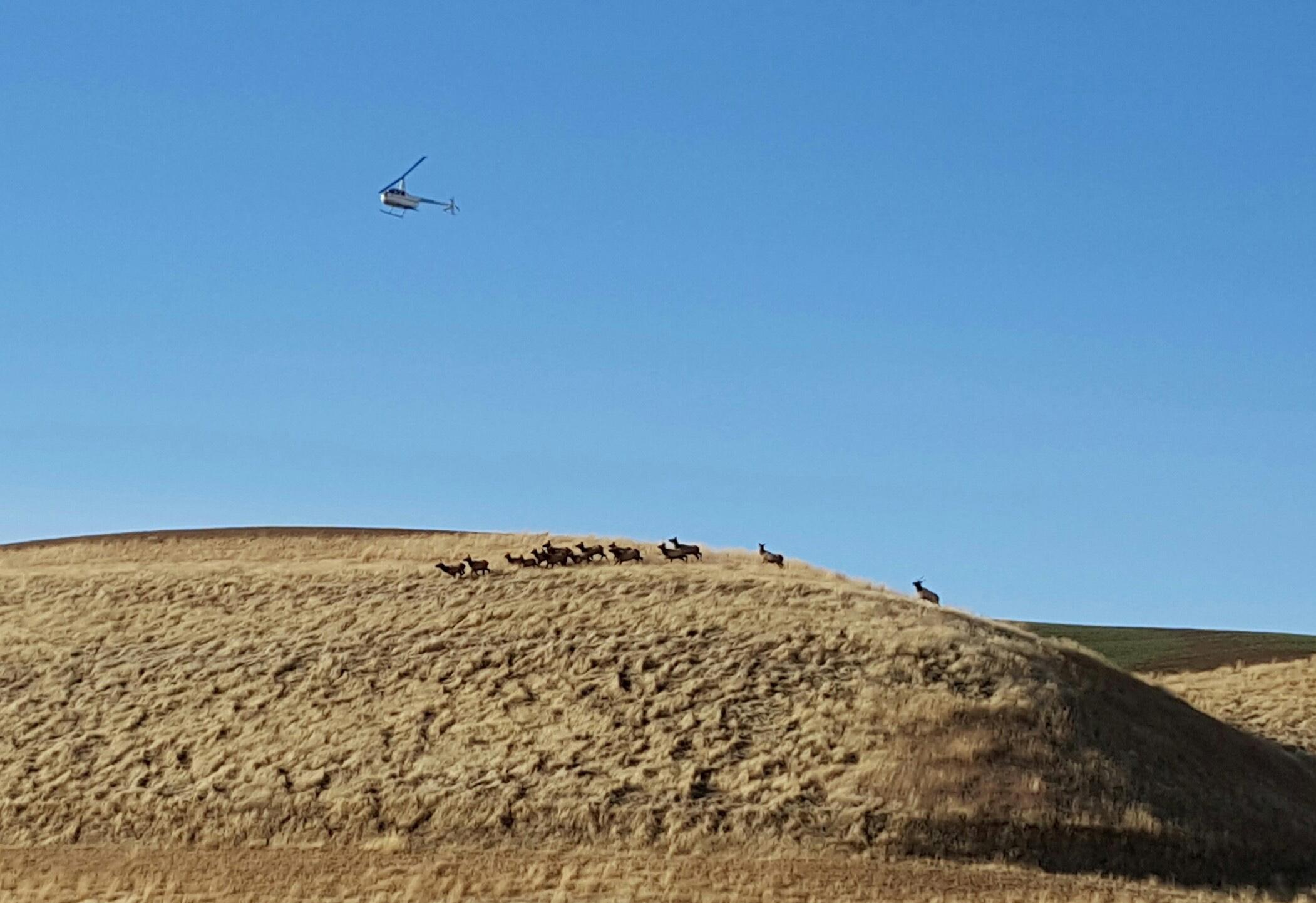 Landers helicopter survey conflicts with elk hunt in for Washington department of fish and wildlife jobs