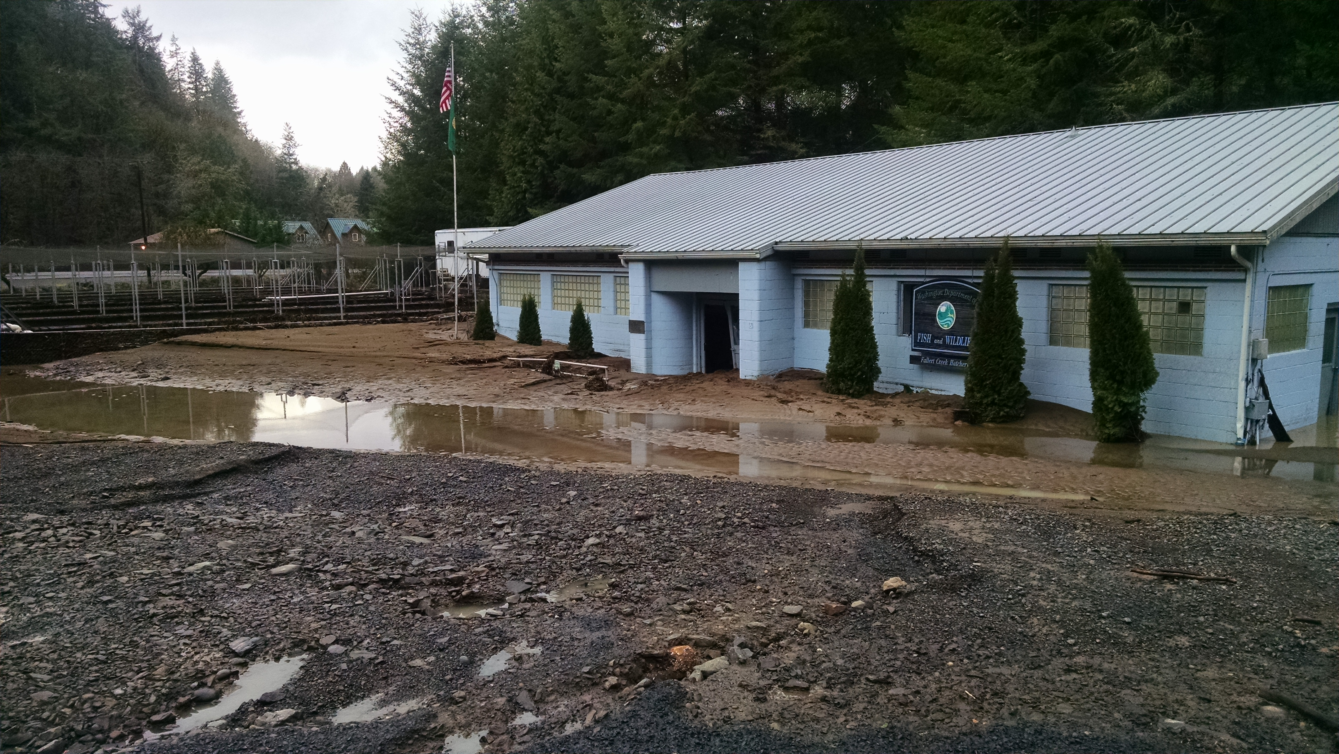 2 4 million hatchery salmon lost in flood the spokesman for Kalama river fishing