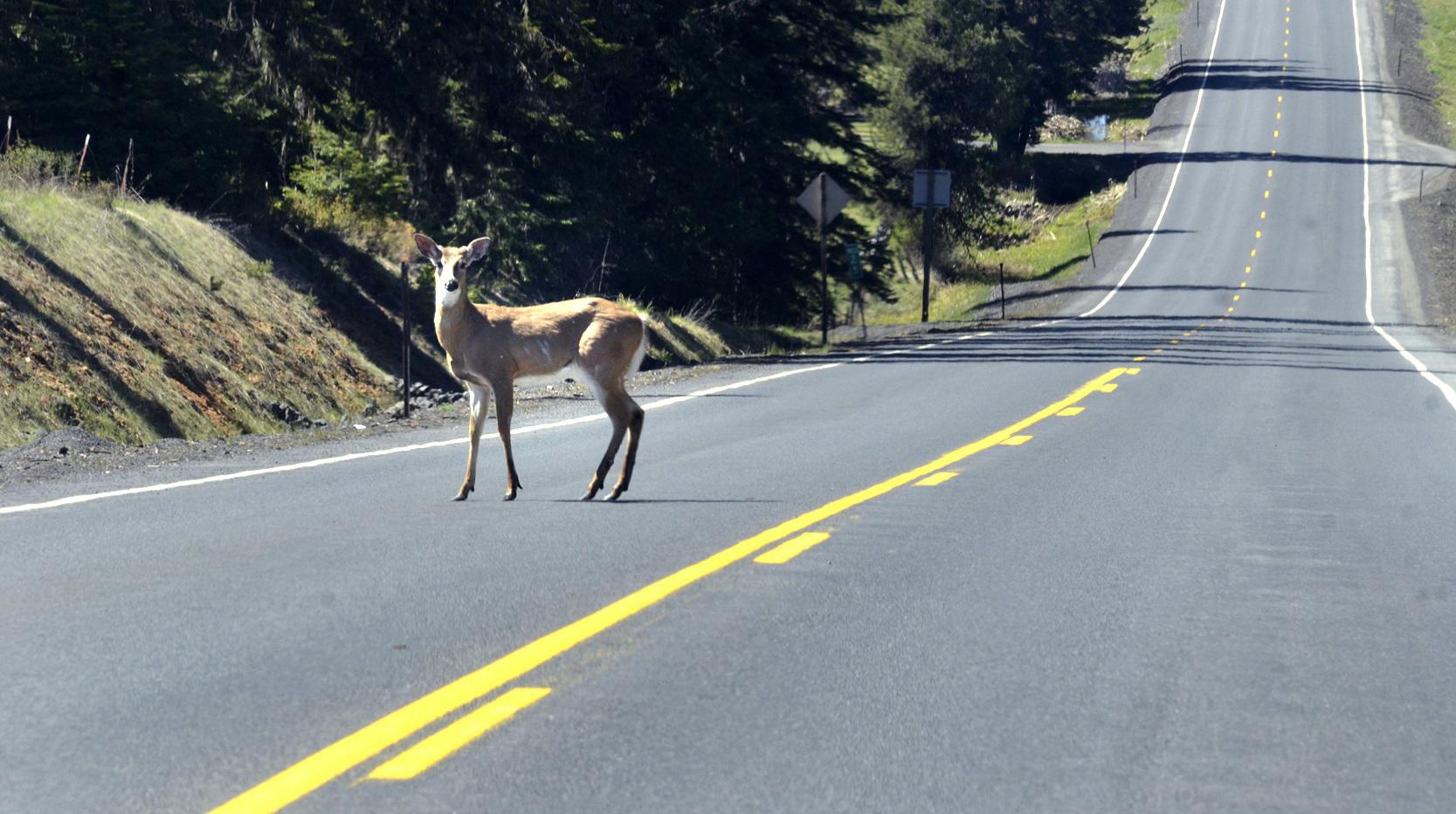 Idaho's roadkill salvage law seen as delicious success | The