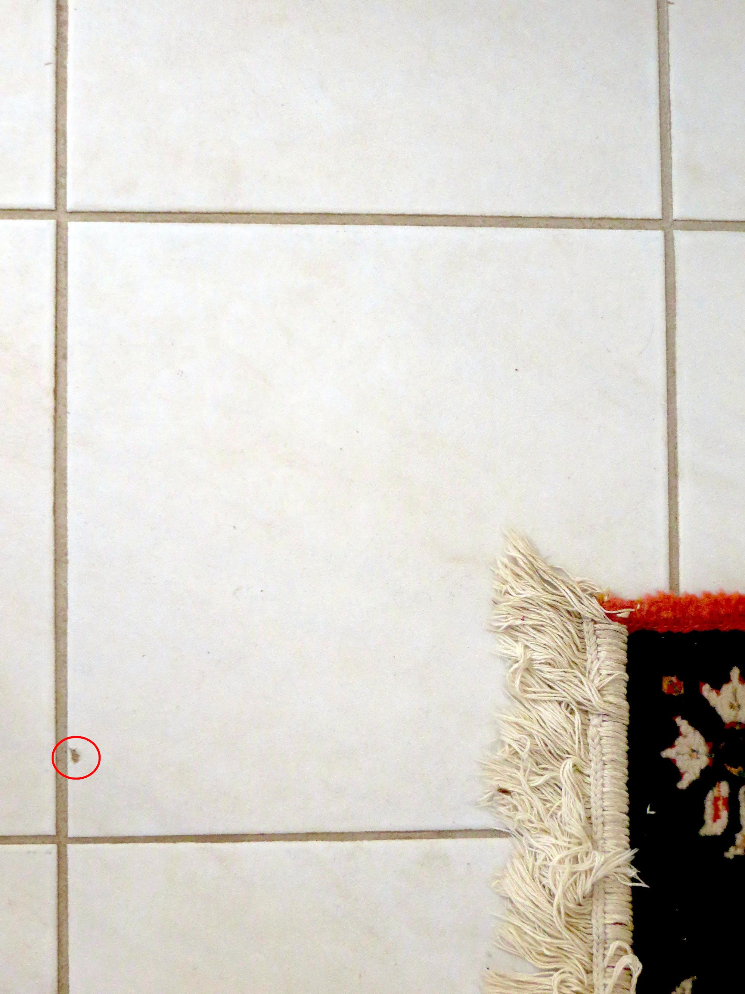 How to repair a chipped tile with epoxy and paint the spokesman a small chip in this white tile can be seen in the area circled in red dailygadgetfo Choice Image