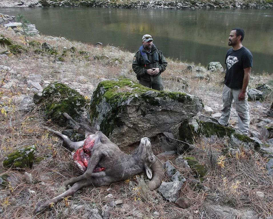 Idaho bighorn poacher banned for life from hunting the for Idaho department of fish and game