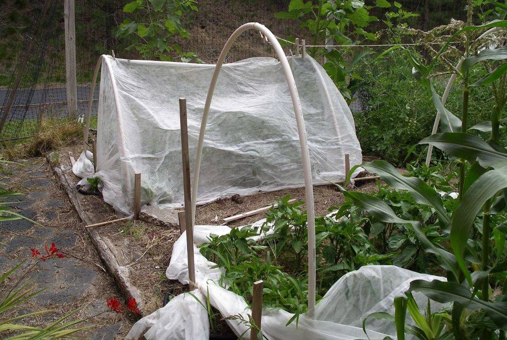 A Simple Hoop House Made Of PVC Pipe And Floating Row Cover Can Help Warm