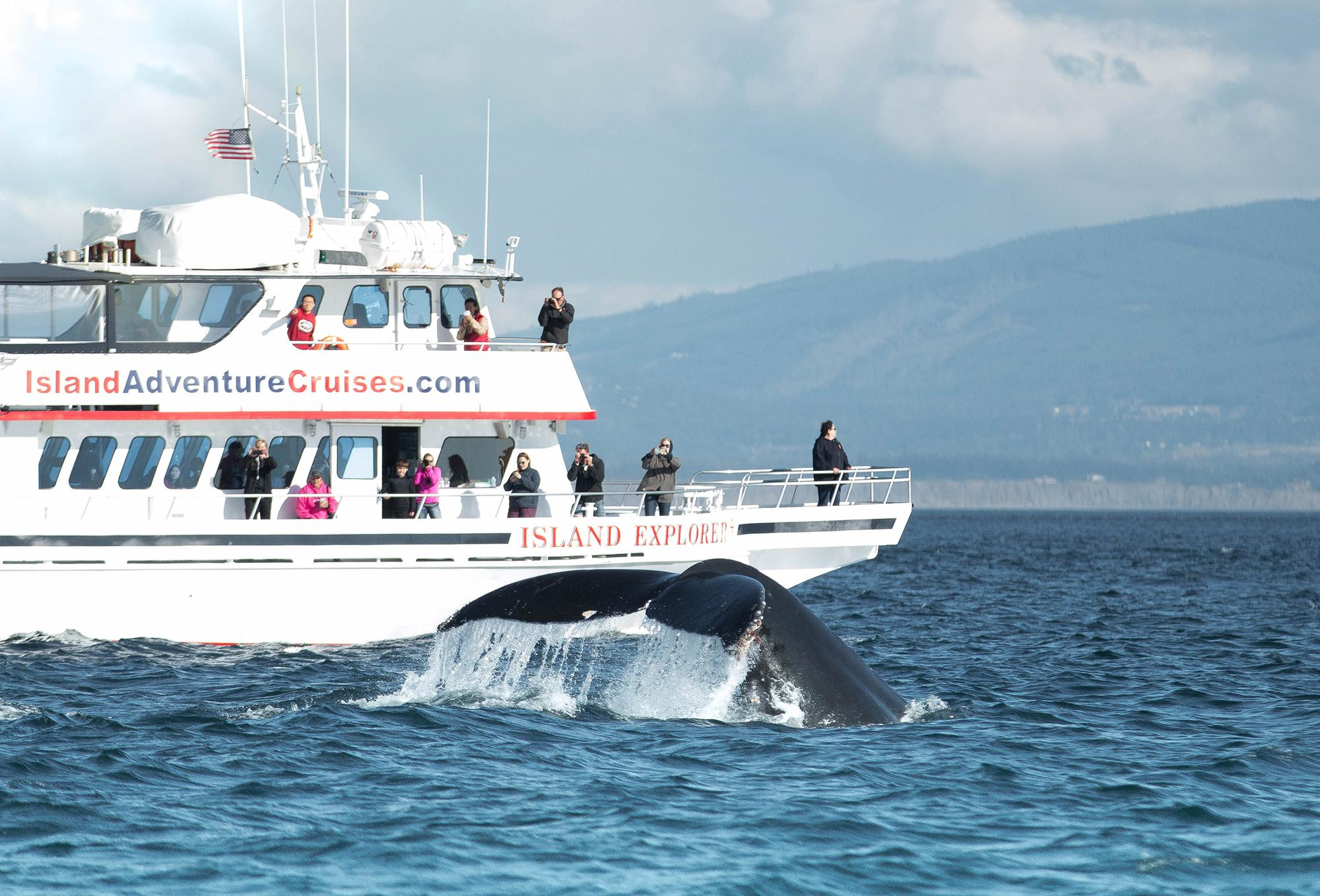 Whale-watch tours having 'epic season' near Port Angeles