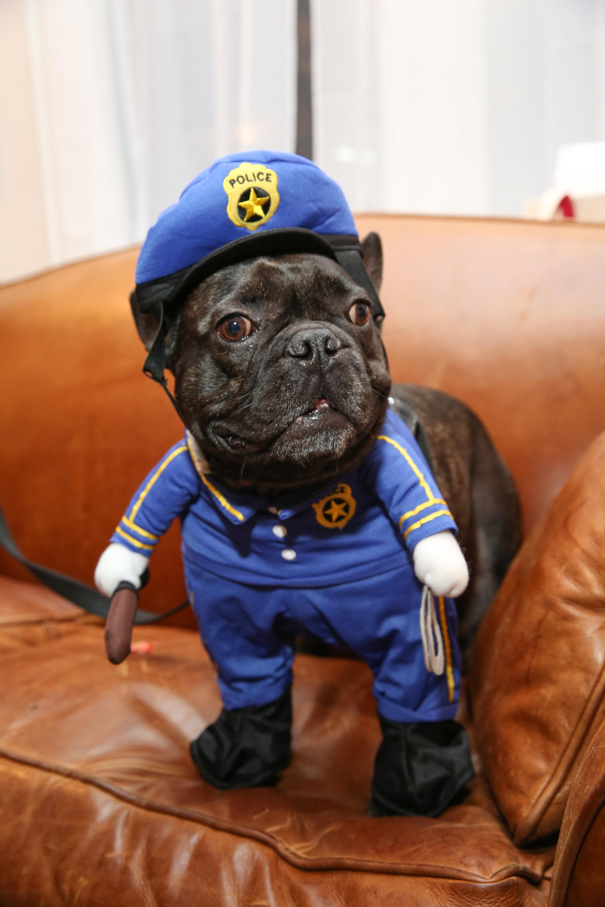 Is your dog's Halloween costume sexist? | The Spokesman-Review