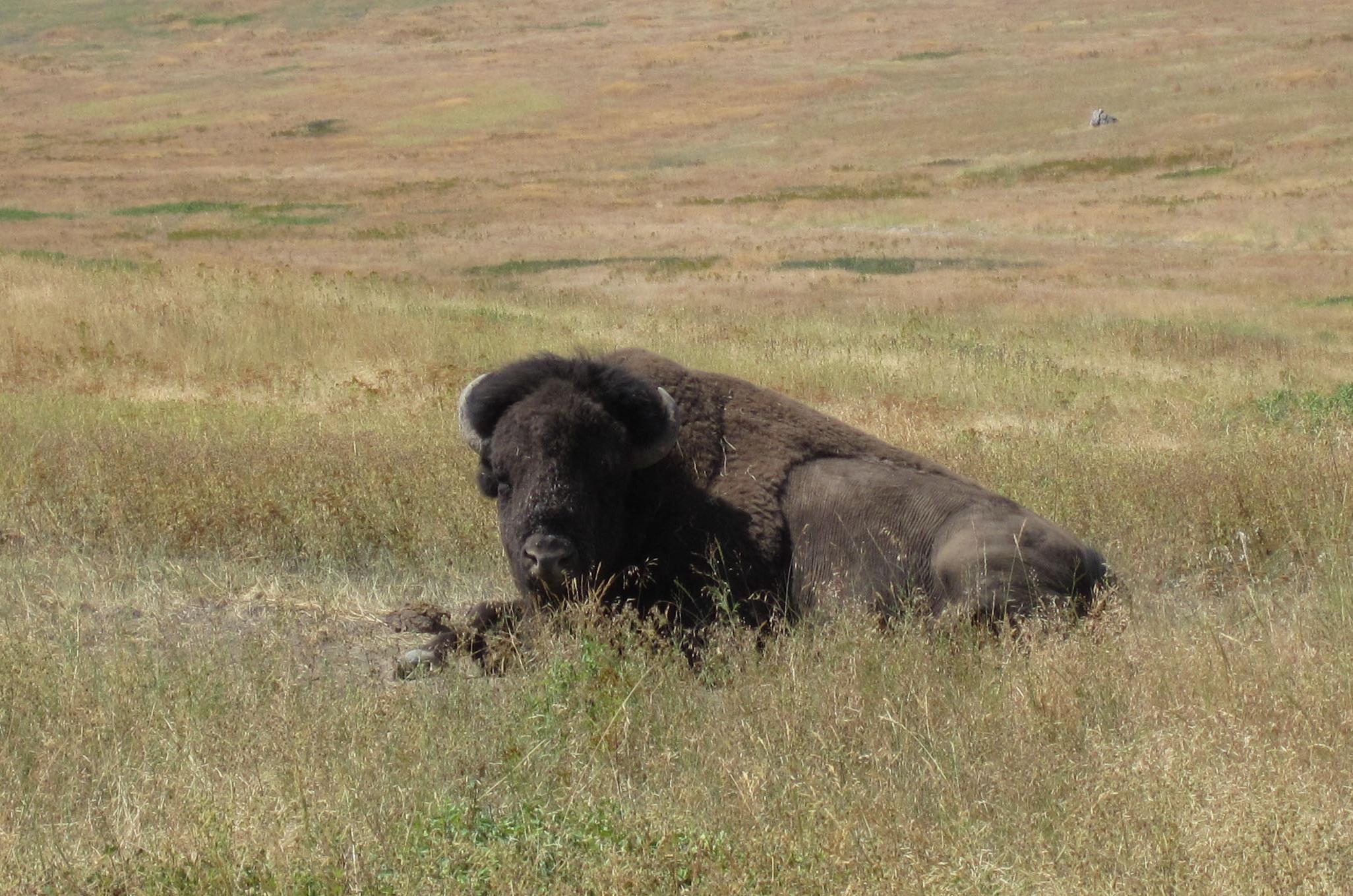 Interior Secretary Ryan Zinke Has Halted Plans To Transfer Management Of  Montanau0027s National Bison Range To