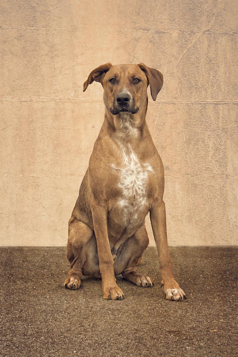 Pet Adoption Kalamazoo