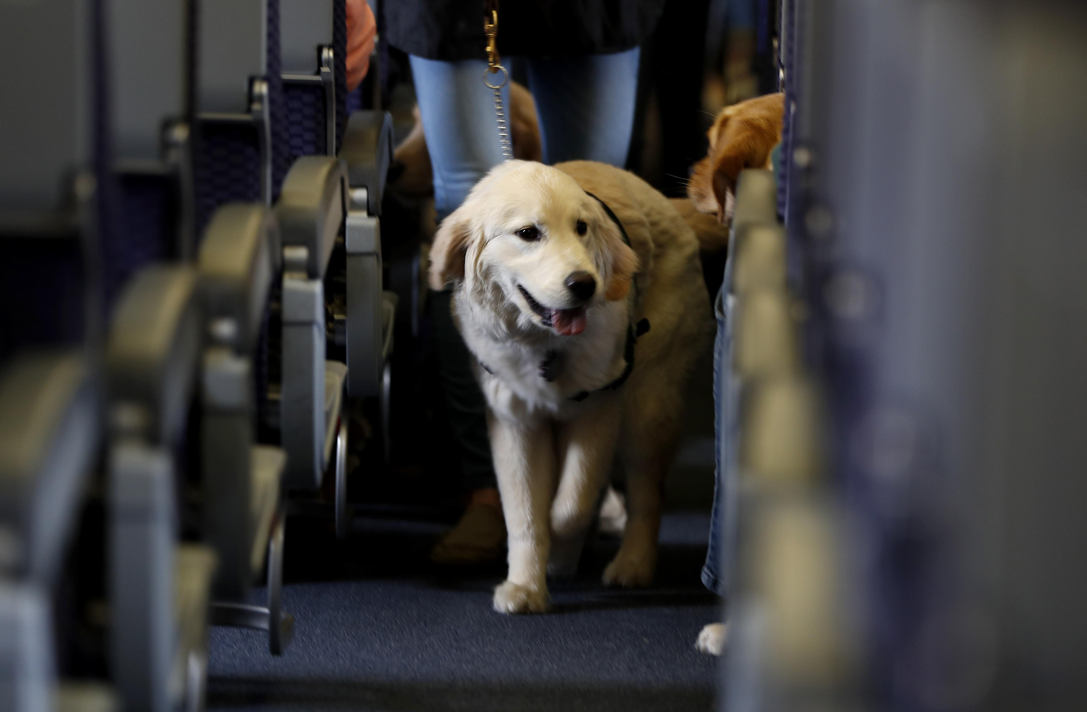 Washington Bill Would Crack Down On Service Animals The