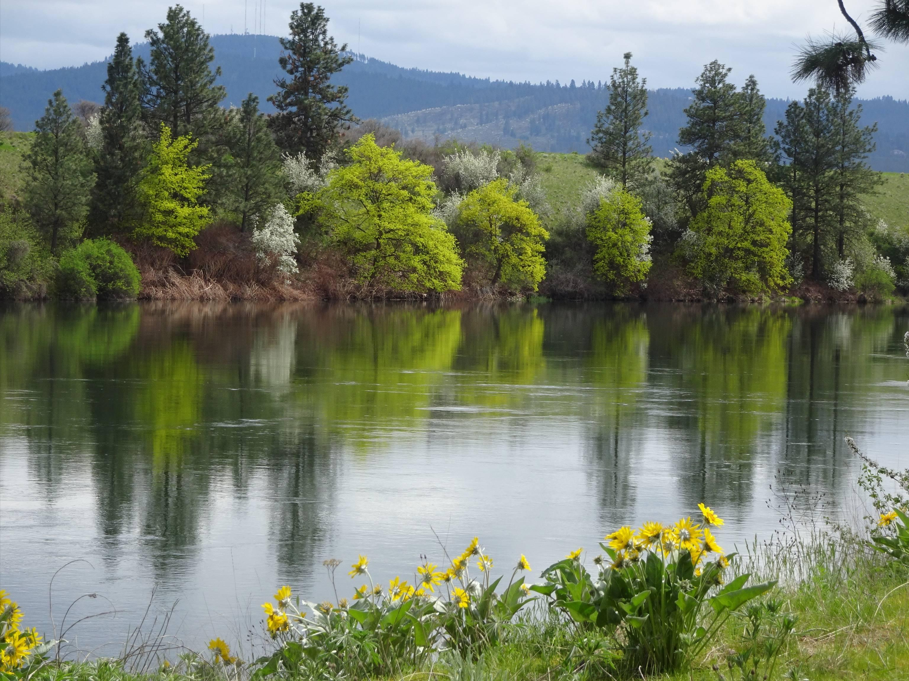 Gardening serviceberry is staple of springtime the spokesman review this time of year the hills and river banks in the inland northwest are ablaze with altavistaventures Images