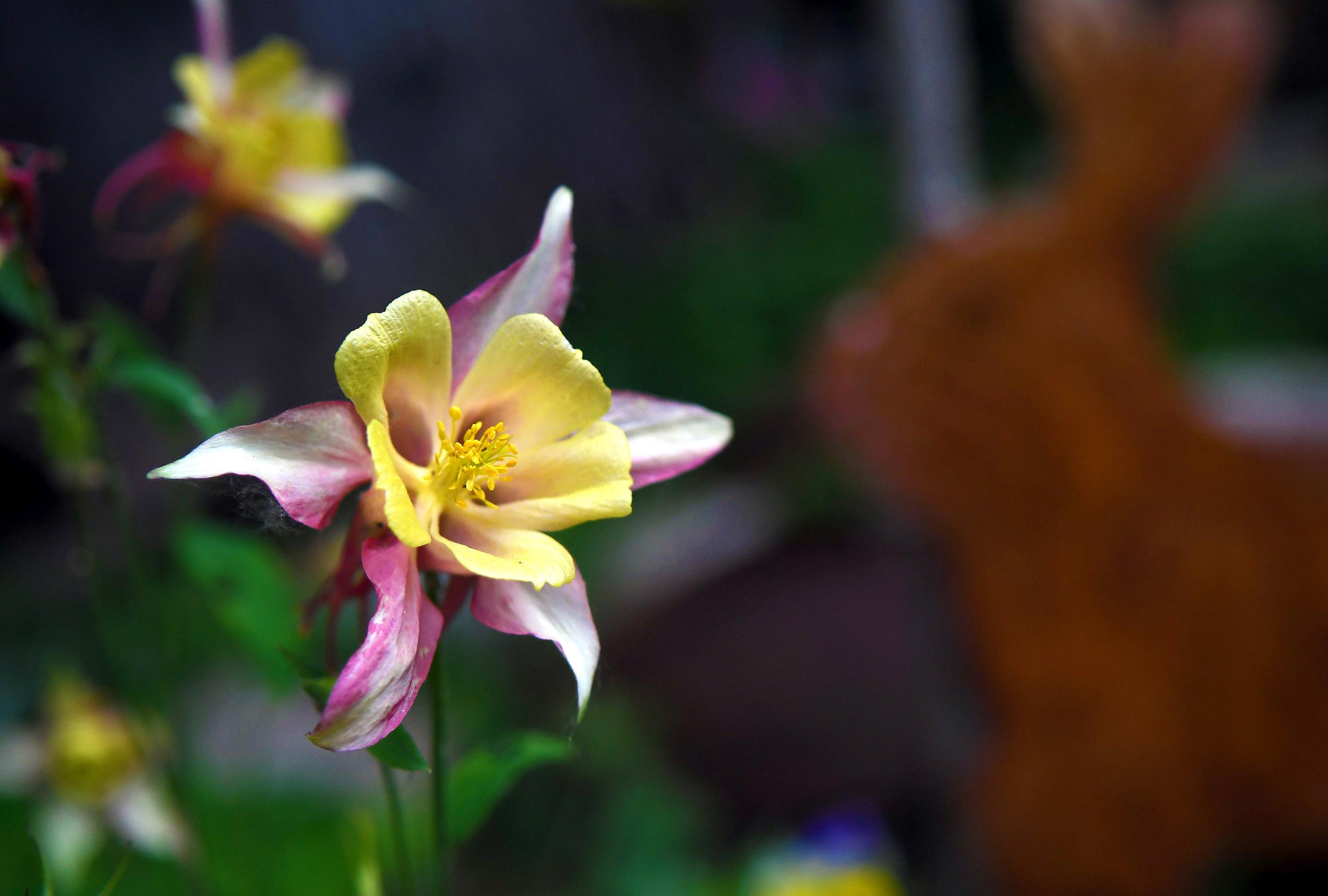 In The Garden Coeur D Alene Tour Opens Gates To Colorful Whimsical North Idaho Gardens Spokesman Review
