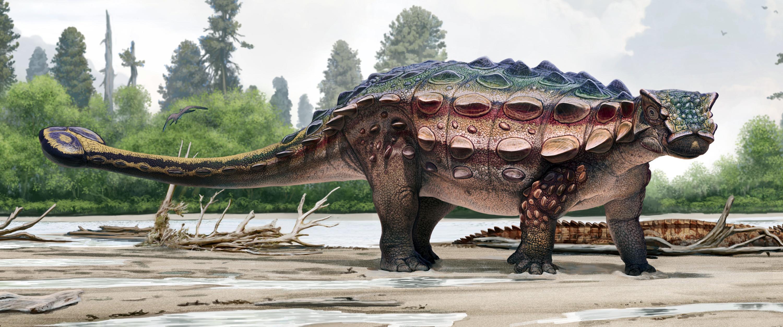 Spokane Natural History Museum
