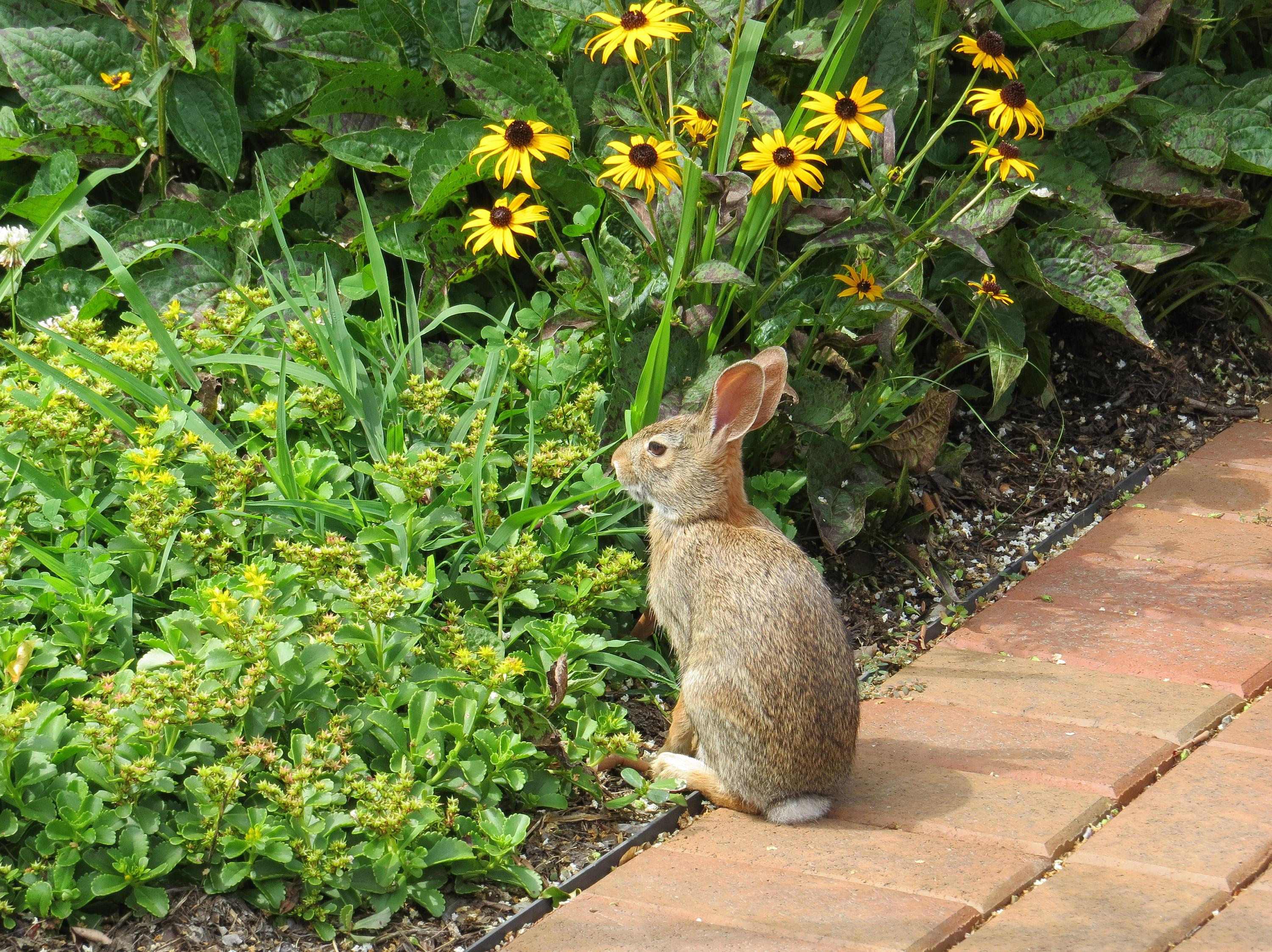 how to keep deer and rabbits out of your garden