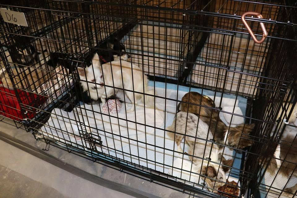 Sheriff's office names suspects in Stevens County puppy mill