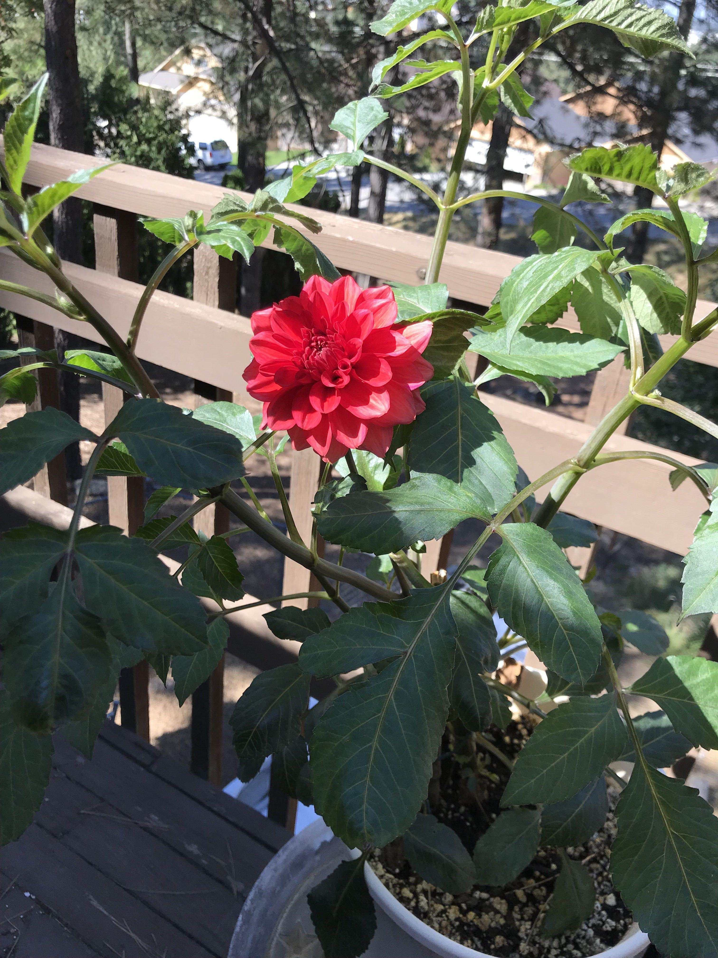 Front Porch Late Bloomer Digs Into Gardening The Spokesman Review