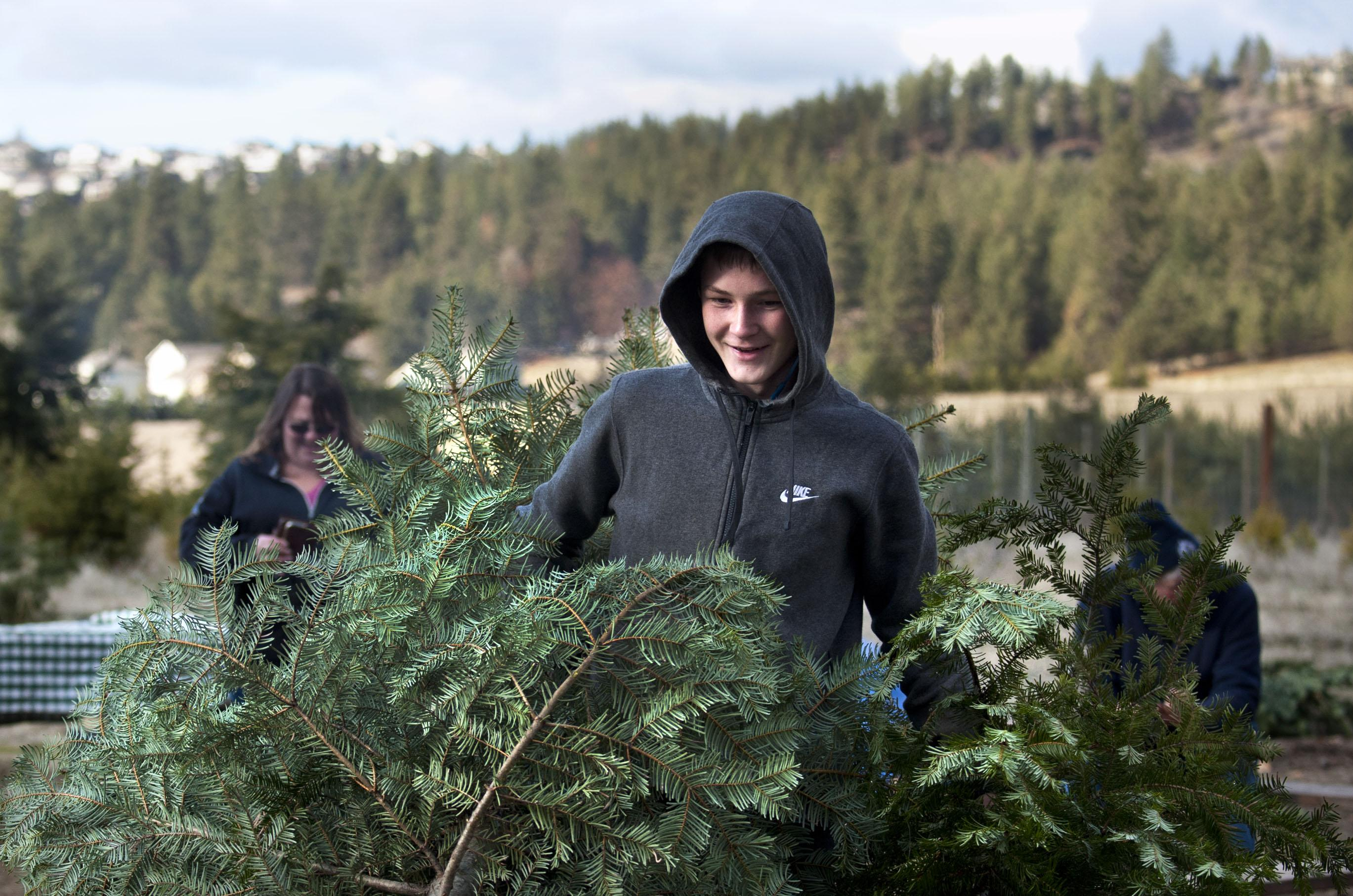 Hutton Settlement Christmas Trees 2020 Rob Curley: Among the Christmas trees, Hutton Settlement's Trevor