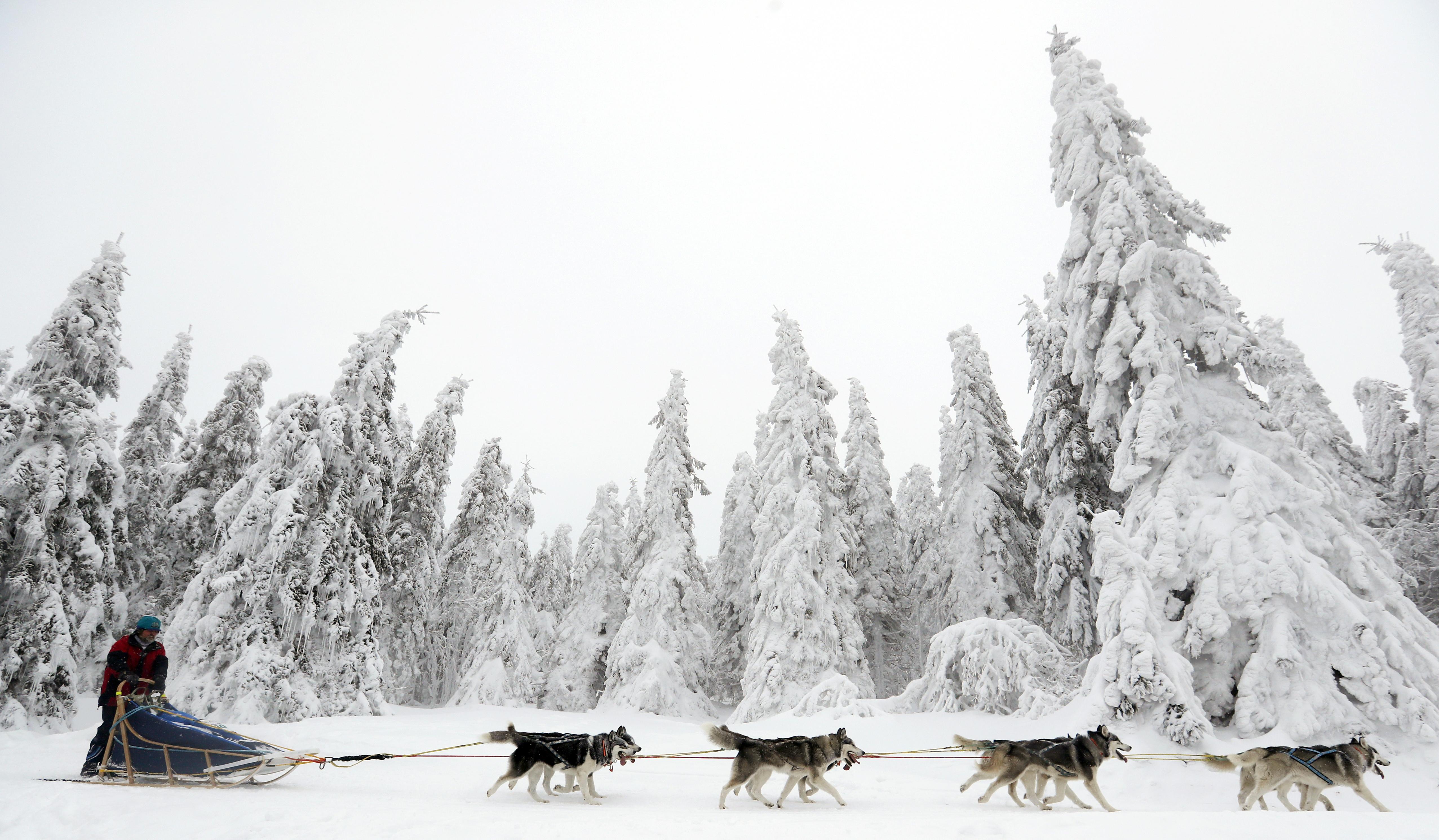 Priest Lake sled dog races set this weekend | The Spokesman