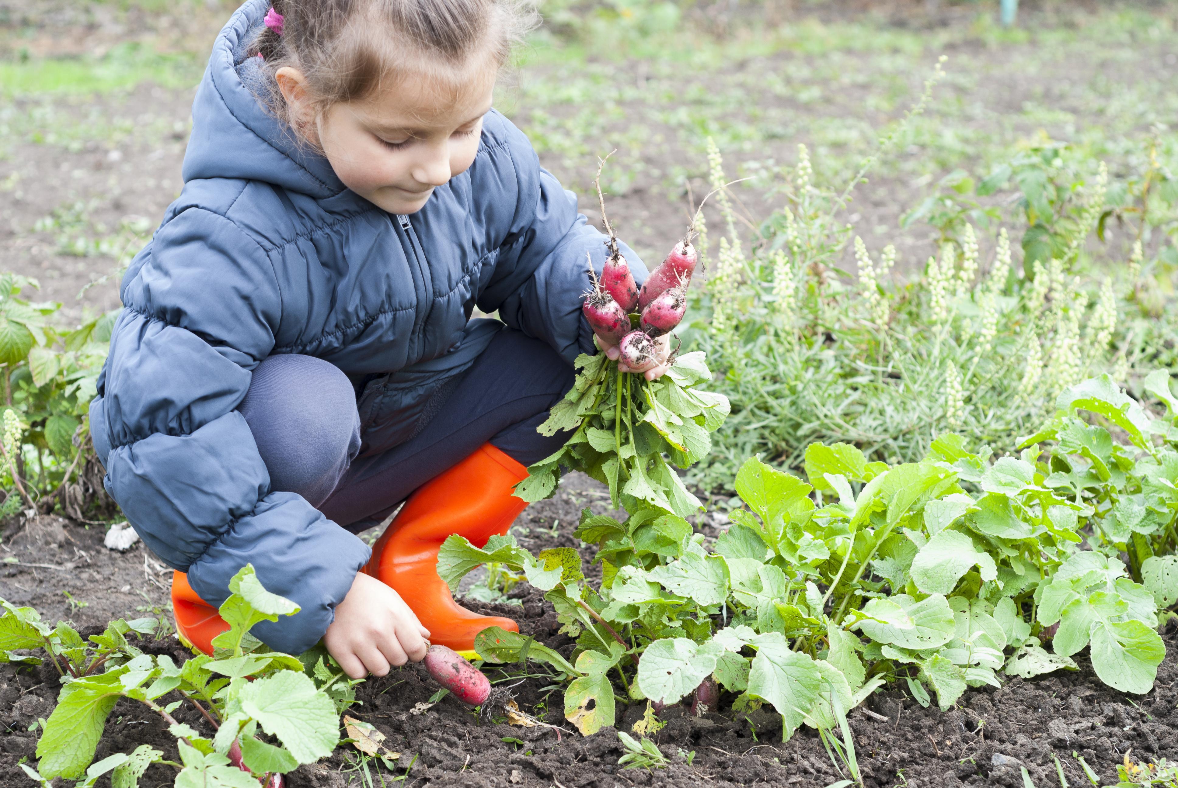 In The Garden Help Children Cultivate Interest In Gardening The