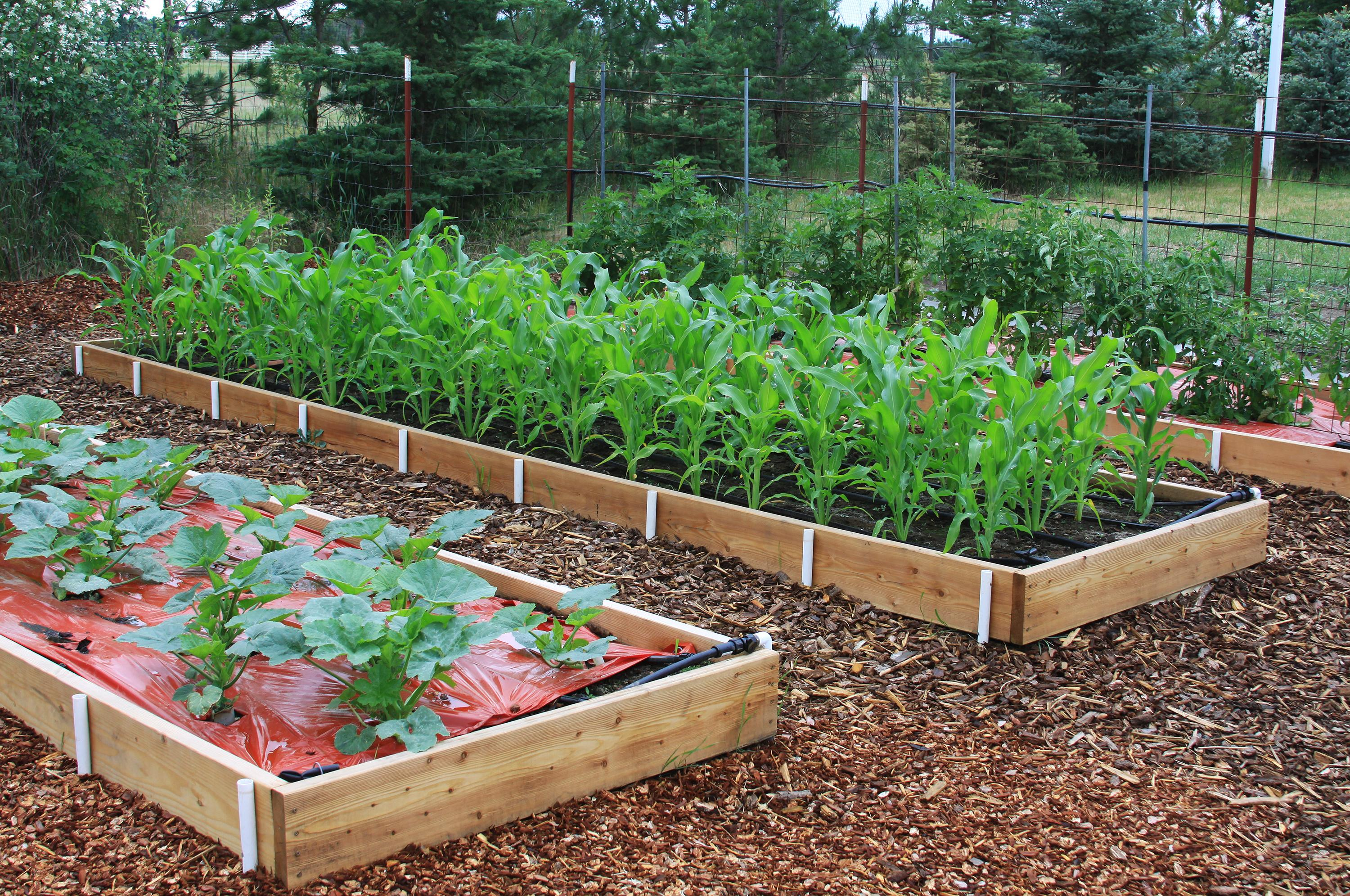In The Garden Raised Beds Offer Bountiful Benefits The