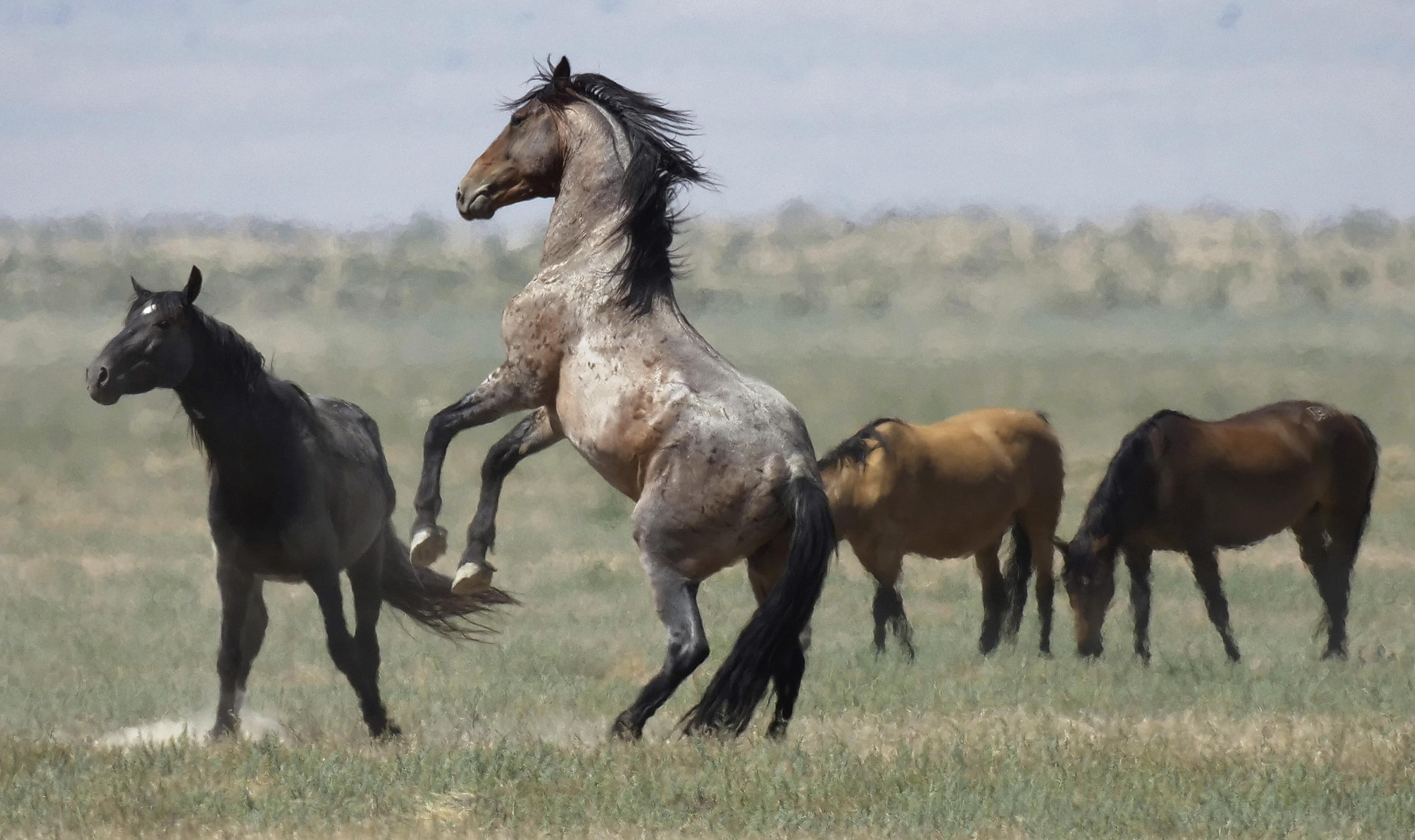 U S Government Could Pay Up To 1 000 To Wild Horse