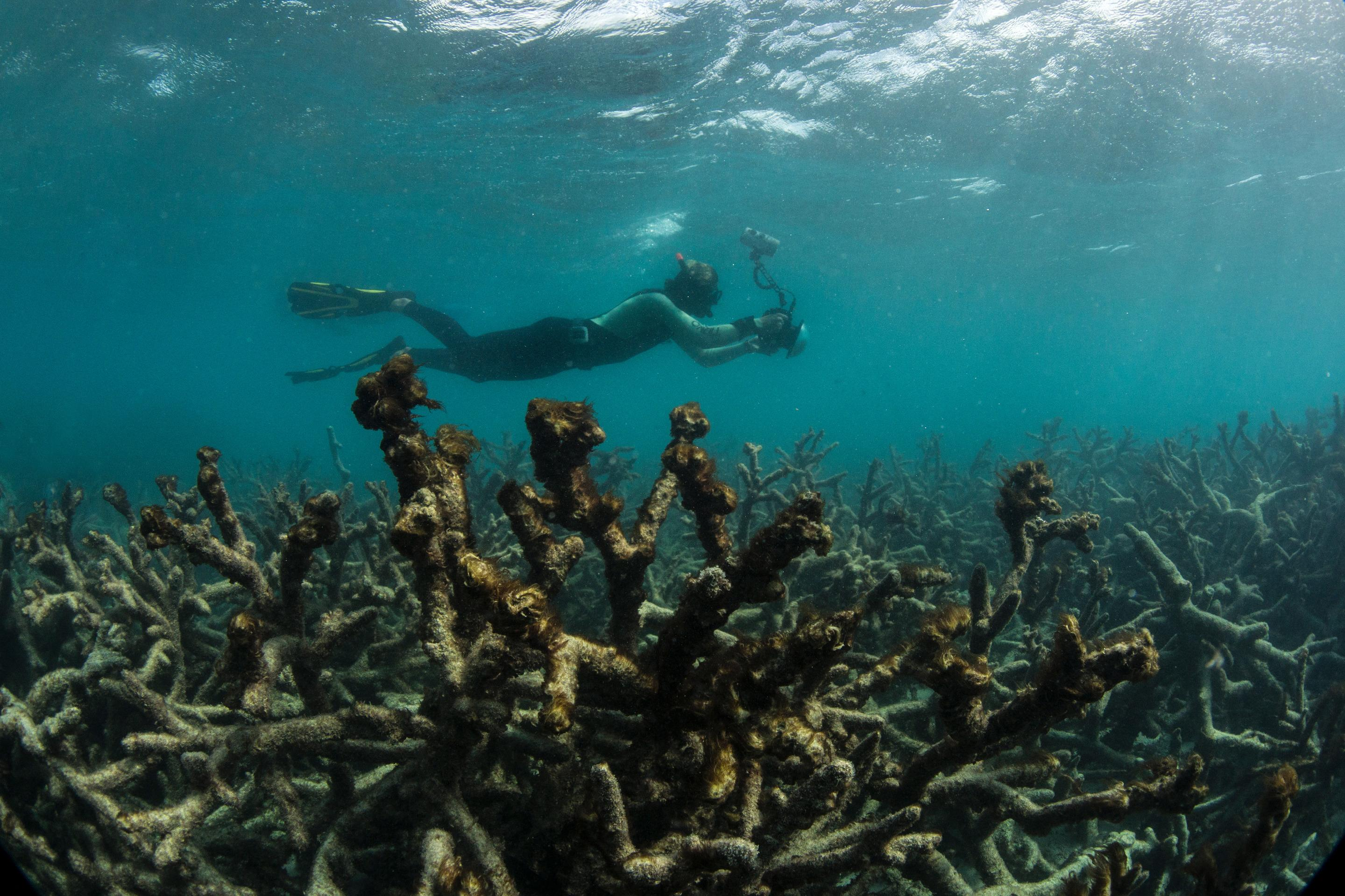 Great Barrier Reef Is Being Battered By Climate Change And