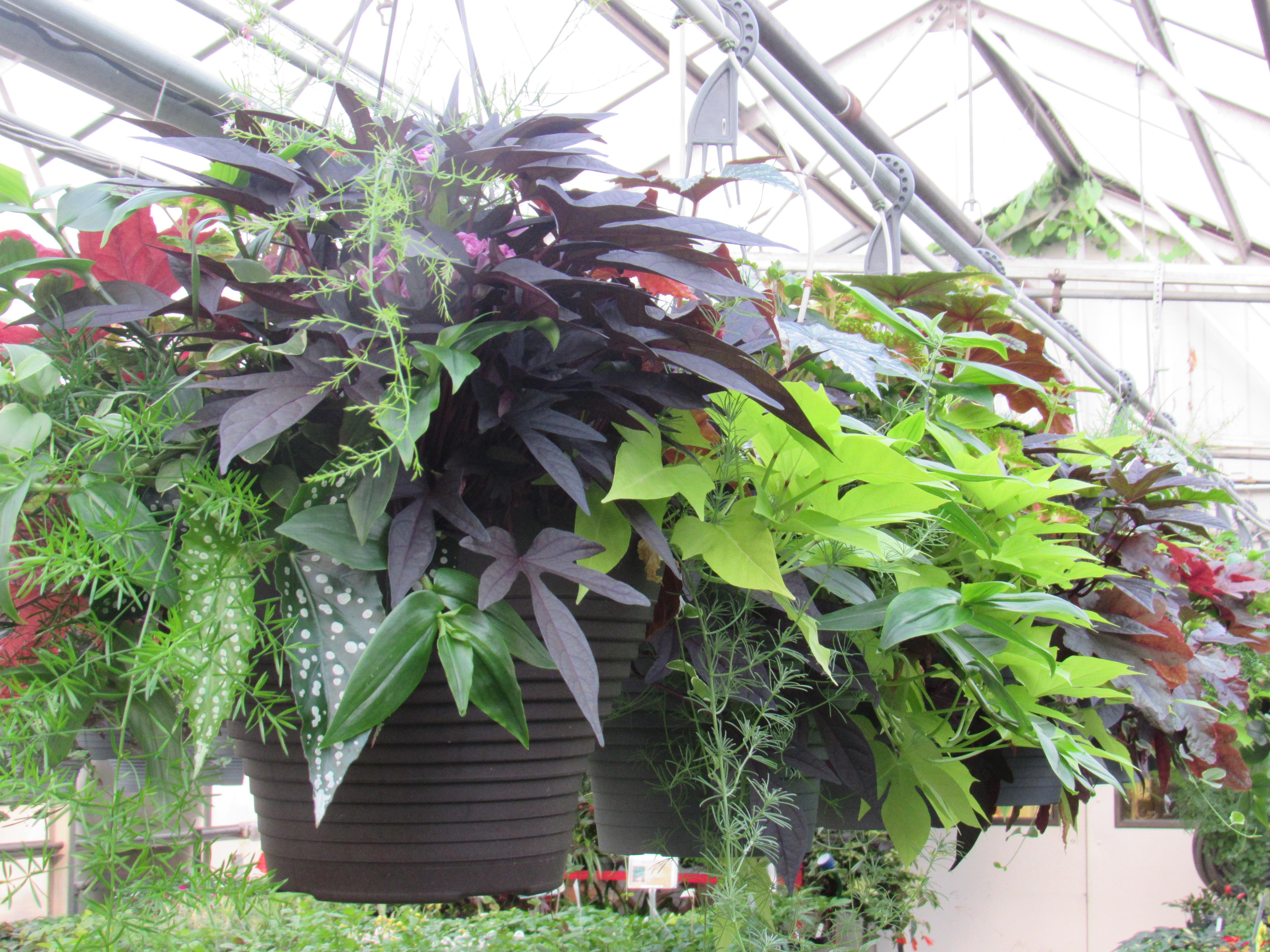 Gardening Consider Growing Plants With Colorful Leaves In Shade
