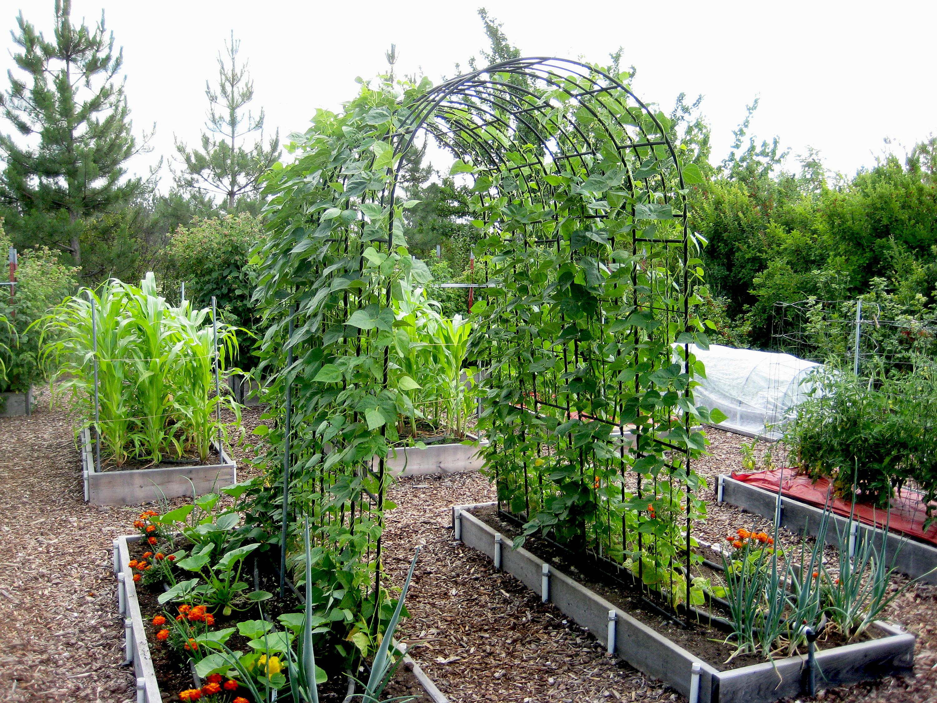 In The Garden Placement Counts When It Comes To Growing Beans