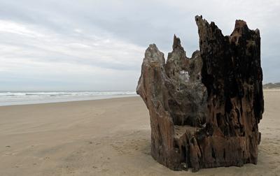 The Big Stump, Walport, Oregon